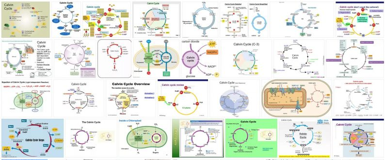 What is Calvin Cycle
