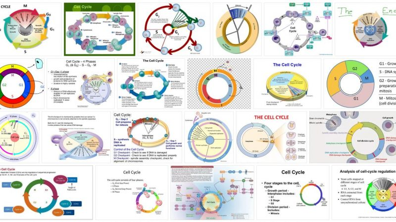 Cell Cycle Definition and Meaning