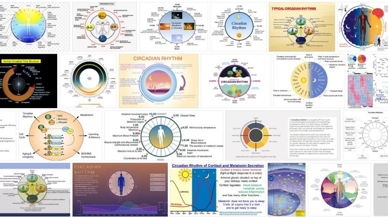 Circadian Cycle Definition and Meaning