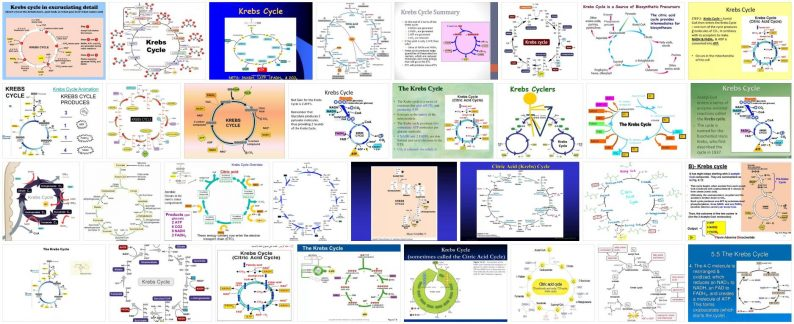 What is Krebs Cycle