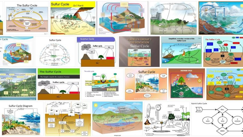 Sulfur Cycle Definition and Meaning