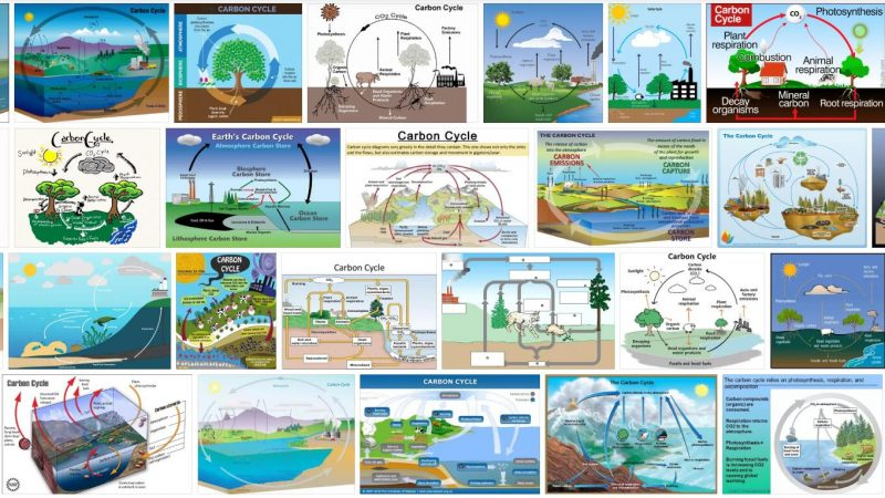 Carbon Cycle Definition and Meaning