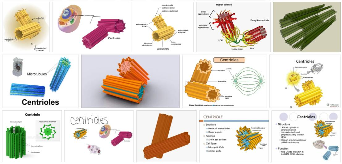 Centriole Definition and Meaning