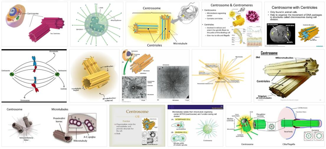 Centrosome Definition and Meaning